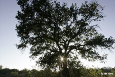Trees Under Attack By Tiny, But Deadly Pests