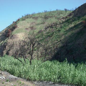 Carbon Creek Restoration