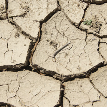 Drought Hits Home for New Developments