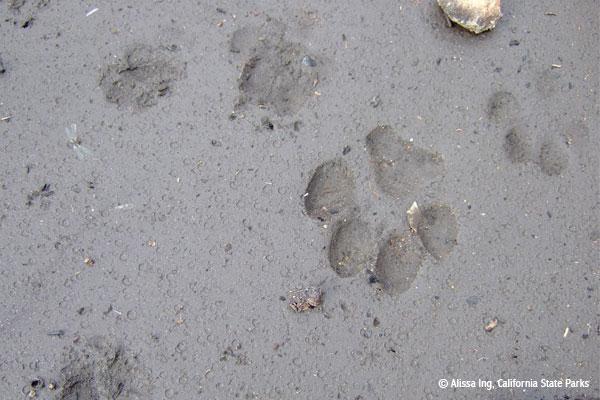 HFE Supports Wildlife Corridor Language in Legislation