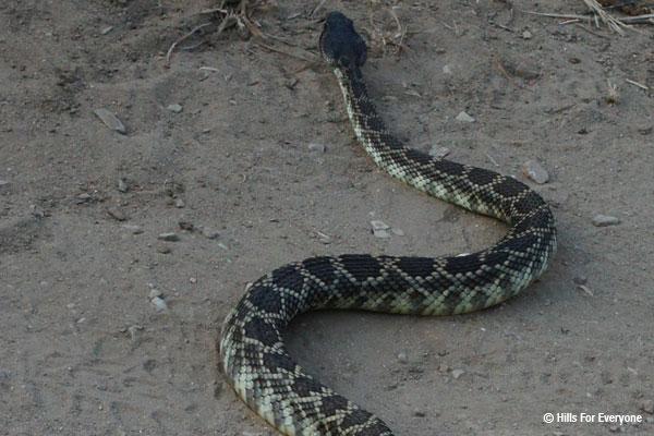 Rattlesnakes and Summertime