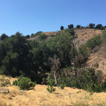Soquel Canyon Mitigation Bank Tour