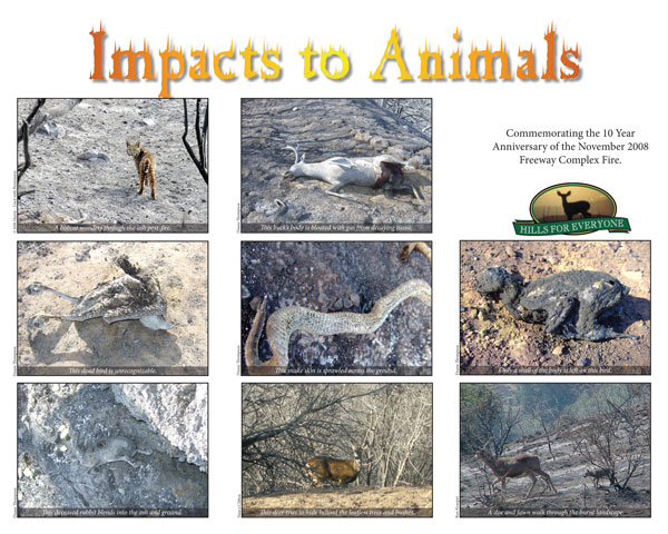 Impacts to Animals