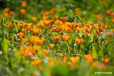 Wildflower Updates