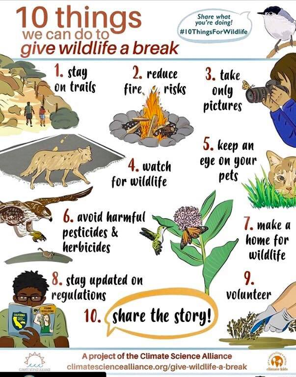 10 things we can do to give wildlife a break.