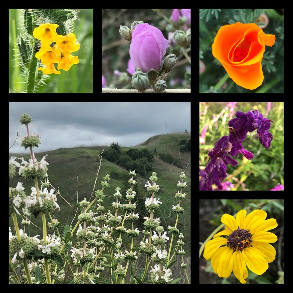 A collage of five small flower photos and one large flower photo with green hills in the background..