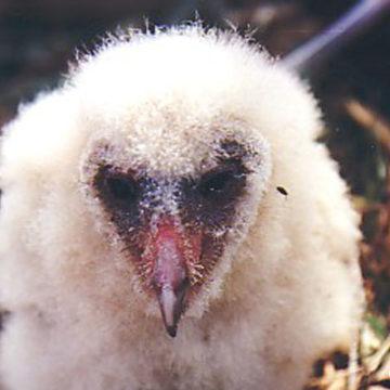 Bird Identification Quiz