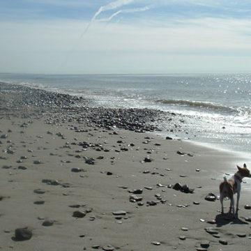 Help San Onofre State Beach