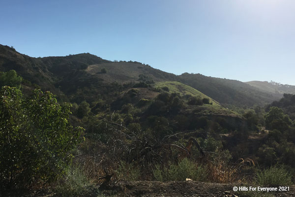 A bush in the foreground and a variety of bushes in the center that lead up to steep hillsides and rolling ridgelines against a blue sky with the sun just out of the frame on the far right.