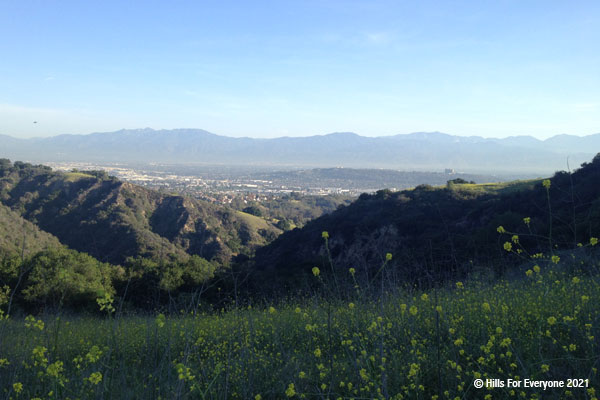Yellow mustard in the foreground with steep vegetated hills in the middle ground and a city below mountains in the distance with a hazy blue sky.