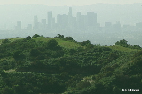 Lush green hillsides with tall buildings in the hazy beyond and mountains past the buildings.