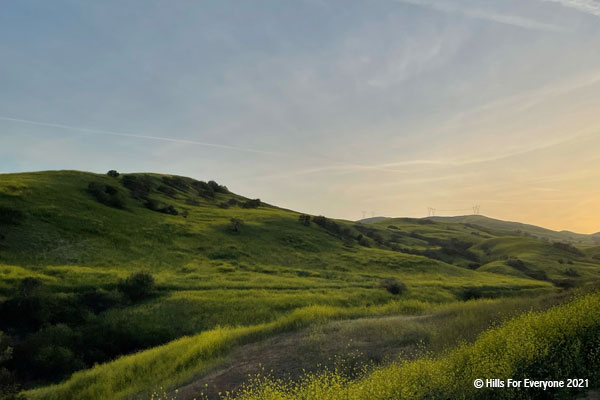 Yellow mustard covers green hills dotted with green and black bushes and trees with a sun setting to the right with blue and yellow hues and scattered thin clouds.