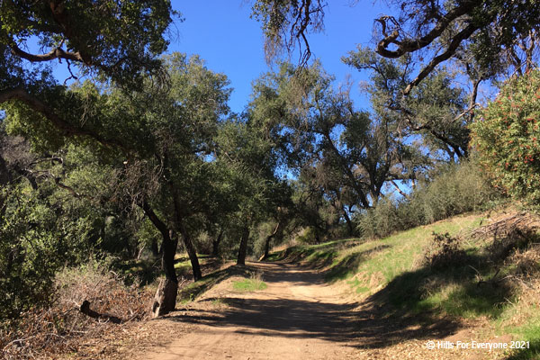 Tall green oaks surround a dirt path with a bright blue sky above and light green grasses on the right.