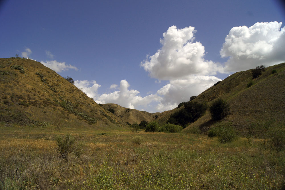 A wide open canyon leading to steep slopes with cactus, grasses, shrubs, and oak trees on each side and blue skies above with scattered white puffy clouds.
